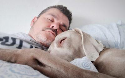 Sleep Divorce – Pet Edition